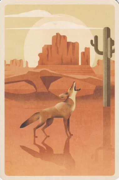 Coyote in Desert Illustrated Postcard