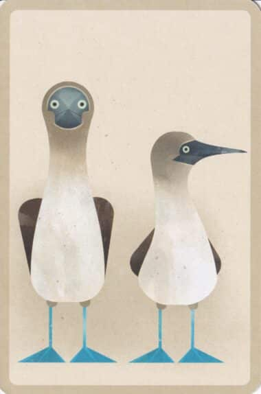 Blue-Footed Booby Bird Postcard