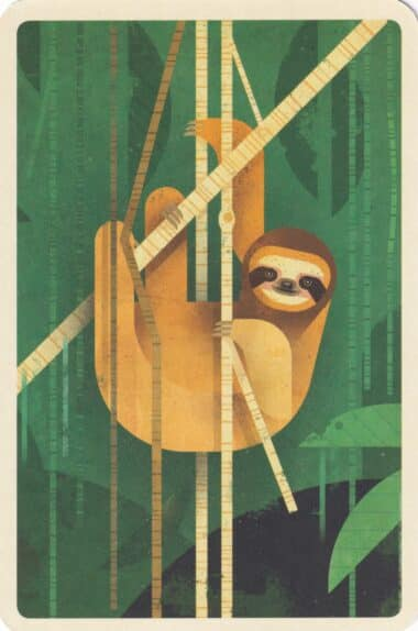 Brown-Throated Sloth in Jungle Illustrated Postcard