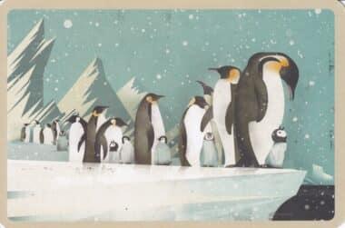 Emperor Penguins on Ice Illustrated Postcard