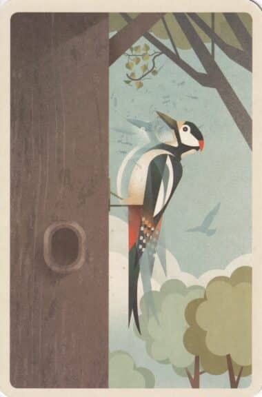 Great Spotted Woodpecker in Tree Illustrated Postcard