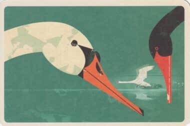White & Black Swans Illustrated Postcard