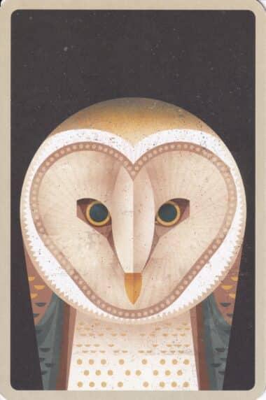 Barn Owl Illustrated Postcard