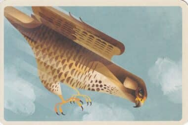 Peregrine Falcon Flying Illustrated Postcard