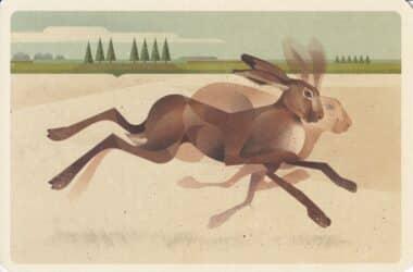 Brown Hare Rabbit Postcard