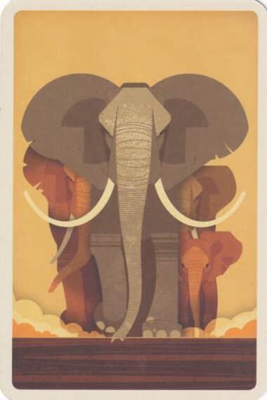 Elephant Illustrated Postcard