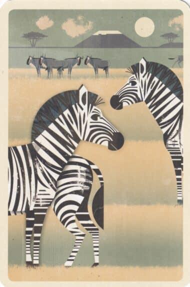 Zebra Illustrated Postcard