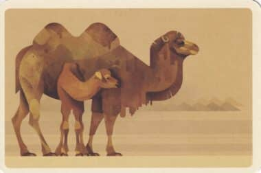 Camel Colorful Printed Postcard