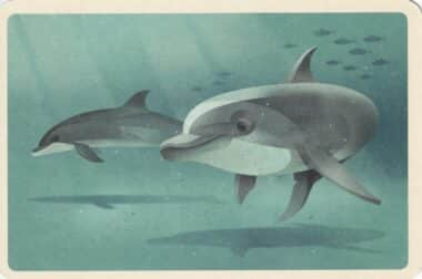 Swimming Bottlenose Dolphin Colorful Printed Postcard