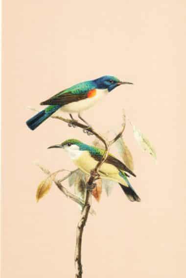 Two Birds Postcard