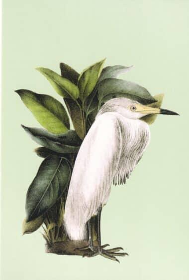 White Bird Postcard