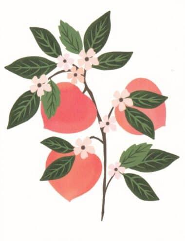 Pretty Peaches Fruit Tree Postcard
